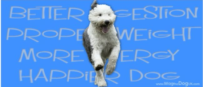 The Health Benefits of Premium Dry Dog Food
