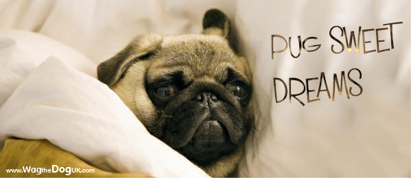 A Pug Lover's Dream And Cozy Gift Idea