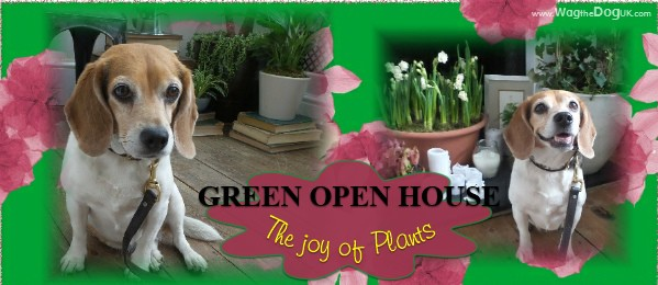 The Joy Of Plants, Open House, Beagle Style