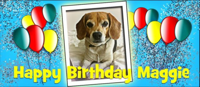 Happy Birthday To Me... 8 Crazy Facts About Beagles