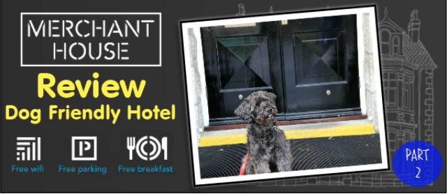 Review Dog Friendly Hotel Cornwall Merchant House Wag The Uk