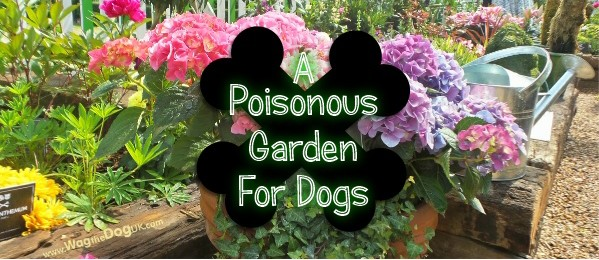 Toxic Plants My Trip To A Poisonous Garden For Dogs – Garden Plants Toxic to Dogs