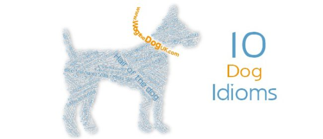10 Dog Idioms - Do You Know What They Mean?
