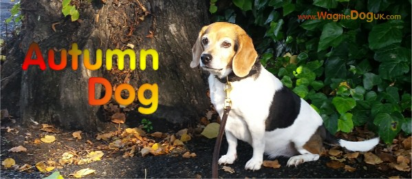 I'm An Autumn Dog - The 5 Reasons Why I Love it!