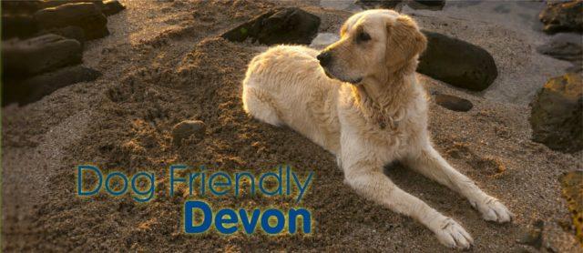 4 Doggie Days Out In Dog Friendly Devon This Autumn
