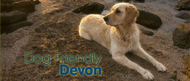 4 Doggie Days Out In Dog Friendly Devon This Autumn
