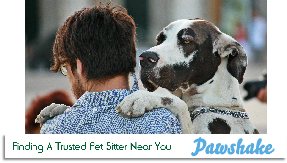 Easy As A Pawshake: Finding A Trusted Pet Sitter Near You
