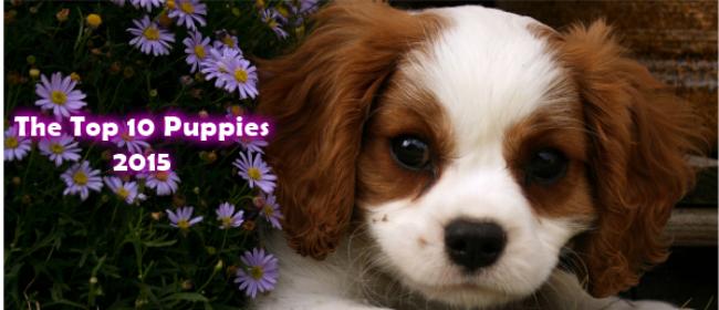 The Top 10 Puppies Trending in 2015 UK