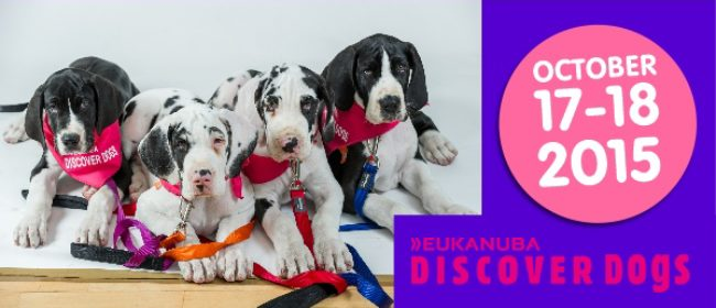 Discover Dogs A Perfect Weekend To Meet Your Pup