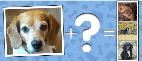 Discover A Crossbreed With this Wag Cool Tool