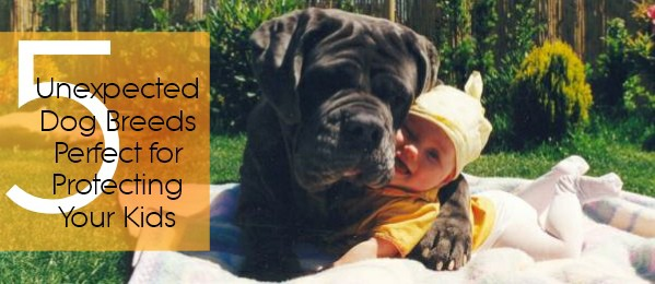 Five Unexpected Dog Breeds Perfect for Protecting Your Kids