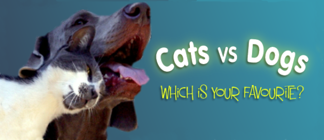 Cats vs Dogs Which Is the Nation's Favourite?