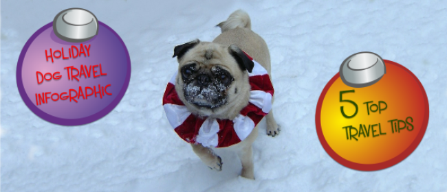 Holiday Dog Travel Infographic & 5 Top Travel Tips