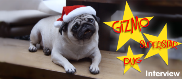 Interview With A Pug Superstar - Must See Xmas Video
