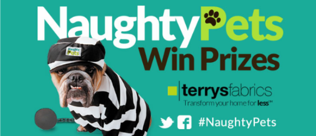 Naughty Pets Contest - Enter To Win Prizes