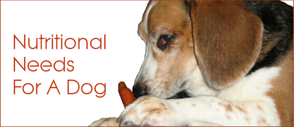 Do You Know The Nutritional Needs For A Dog