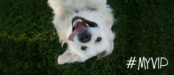Panasonic Smart Home #MyVIP Dog Love Facts & Contest