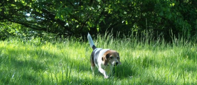 Dog Walks, Audio Books & Why I love it with my Peep