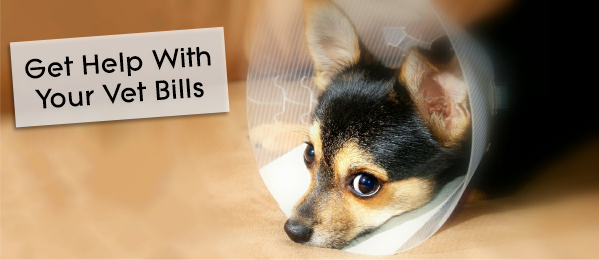 How To Get Help With Your Vet Bills [12 Tips]