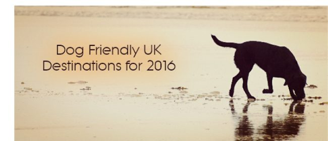 Dog Lovers - Dog Friendly UK Destinations for 2016