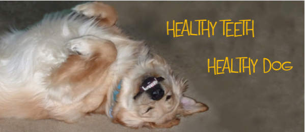 Nutrition And Healthy Dog Teeth = Healthy Dog