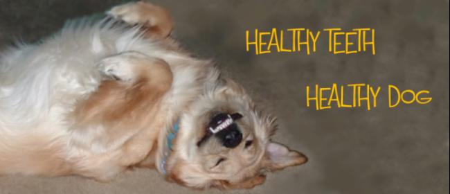 Nutrition And Healthy Dog Teeth = Healthy Dog