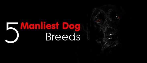 The 5 Manliest Dog Breeds
