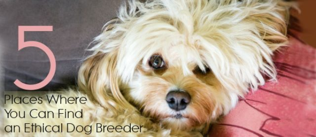 5 Places Where You Can Find an Ethical Dog Breeder