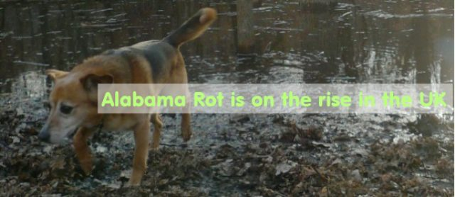 5 Common Symptoms of Alabama Rot