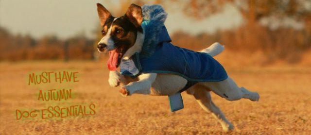 5 Must Have Autumn Dog Essentials