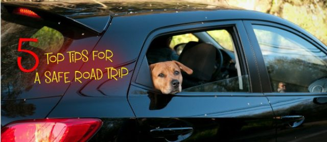 5 top tips for a safe road trip with your dog