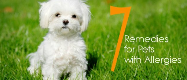 Seven Effective Remedies for Pets with Allergies