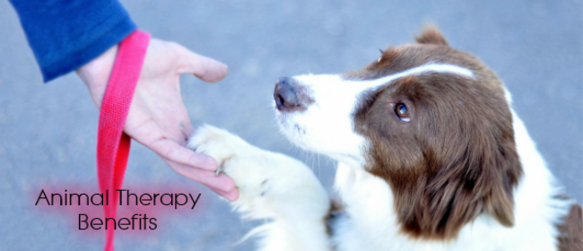 Animal Therapy is Beneficial for Emotional Support