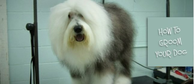 How to Groom Your Dog with Electric Clippers at Home?
