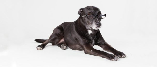 Signs of an Intelligent Dog - Clever Dog!