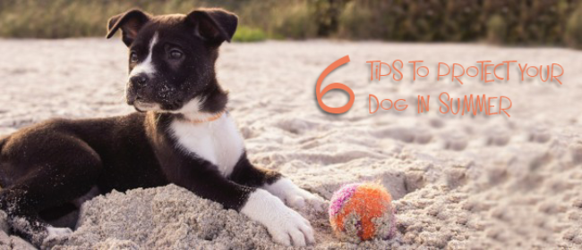 6 Tips To Protect Your Dog In Summer