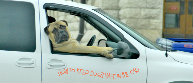 Clever Tips:  How To Keep dogs safe In The Car