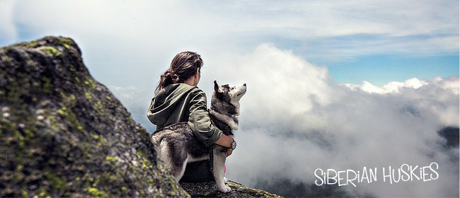 10 Awesome Facts about Siberian Huskies