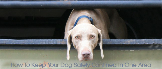 How To Keep Your Dog Safely Confined In One Area