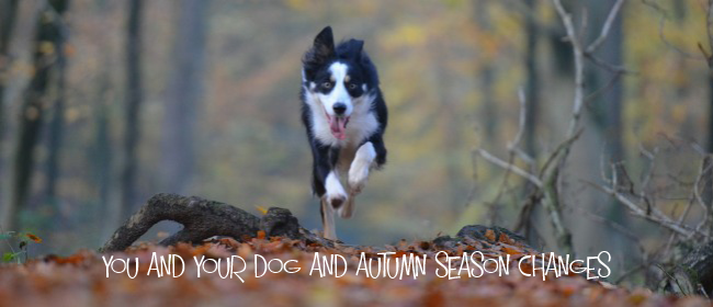 You and Your Dog And Autumn Season Changes