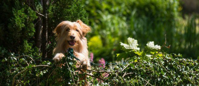 Barking Up The Wrong Tree: 5 Common Mistakes When Moving Home With Dogs