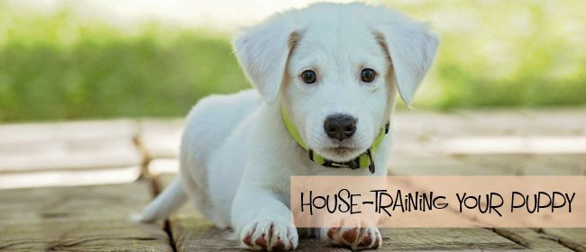 How House-training Your Puppy Can Be Easy