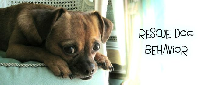 Top 10 Behavior Issues In Rescue Dogs