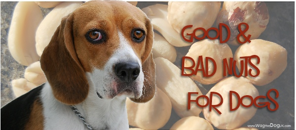 are nuts good for dogs