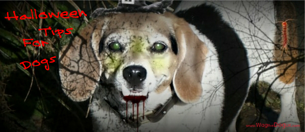 howling halloween ideas safety tips for dogs