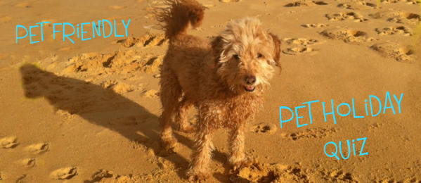 A Fun Pet Holiday Quiz - Best Place to Go With Fido