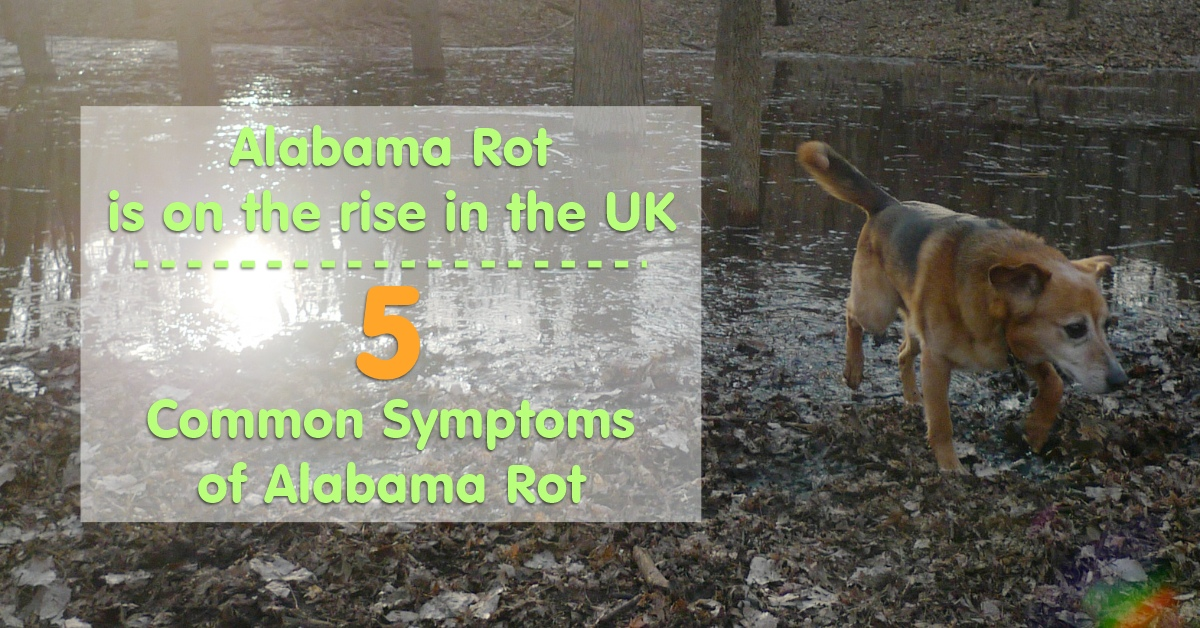 5 Common Symptoms of Alabama Rot - Wag The Dog UK