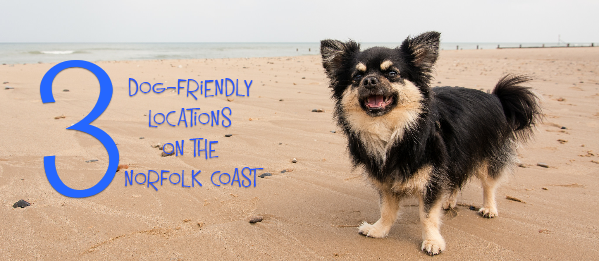 3 Delightful Dog-Friendly Locations On The Norfolk Coast