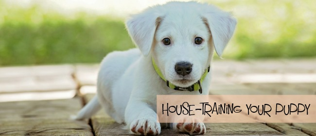 How House Training Your Puppy Can Be Easy
