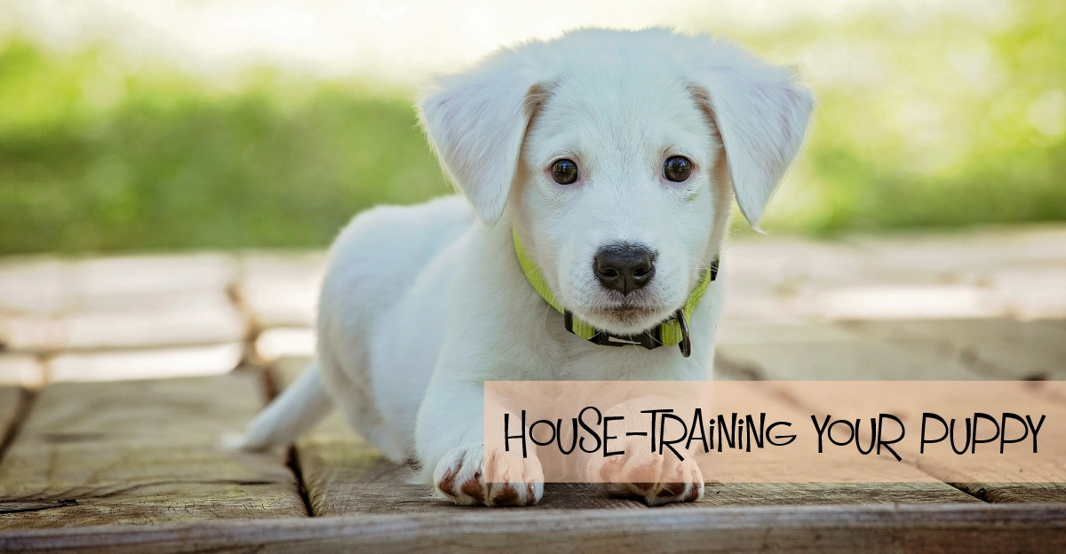 How House Training Your Puppy Can Be Easy Wag The Dog Uk